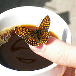 coffee with butterfly